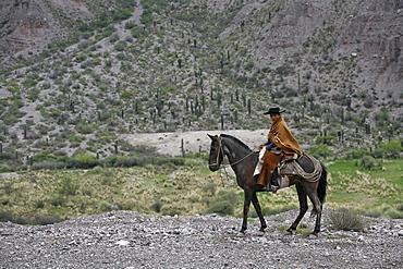 Northern gaucho riding a horse near Purmamarca, Quebrada de Humahuaca, Jujuy province, Argentina, South America