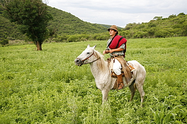 Gaucho riding a horse at an estancia near Guemes, Salta Province, Argentina, South America