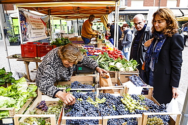 Fruit and vegetable stall at a market in Alba, Langhe, Cueno, Piedmont, Italy, Europe