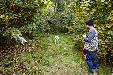 Truffle hunter with his dogs, Langhe, Cueno, Piedmont, Italy, Europe