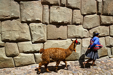 Woman with llama walking along the Inca wall at Hathunrumiyoq Street, Las Piedras del los 12 Angulos (Stone of 12 angles), Cuzco, UNESCO World Heritage Site, Peru, South America