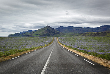 Empty road, Iceland, Polar Regions