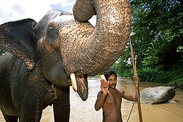 Elephant and his mahout washing in the river near Kandy, Sri Lanka, Asia
