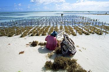 Two women working in seaweed cultivation, Zanzibar, Tanzania, East Africa, Africa
