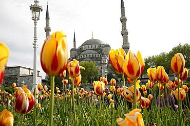 The Blue Mosque (Sultan Ahmet Camii), Istanbul, Turkey, Europe