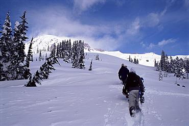 Snowboarders, Mount Rainier, Washington State, United States of America (U.S.A.), North America