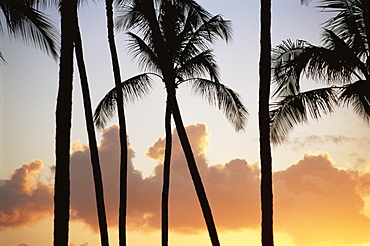 Palm trees silhouetted against clouds and sunset, Salt Water Pond State Park, Kauai, Hawaii, United States of America, Pacific, North America