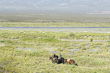 Argentine cowboys in the pampas, near Malargue, Argentina, South America