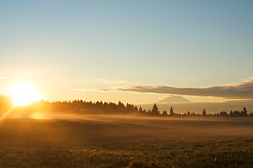 The sun rises on field of green grass with Douglas Firs and Mount Rainier in the distance, Vashon Island, Washington State, United States of America, North America