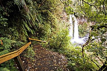 Dawson Falls, Egmont National Park, Taranaki, North Island, New Zealand, Pacific