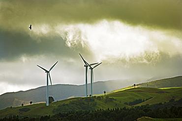 Wind turbines and soaring bird of prey, Ruahine ranges, Manawatu, North Island, New Zealand, Pacific
