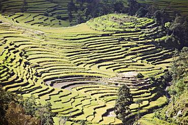 Terraced fields as seen in winter from Nagarkot, Himalayas, Kathmandu valley, Nepal, Asia