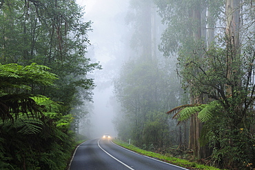 Road and fog, Dandenong Ranges, Victoria, Australia, Pacific