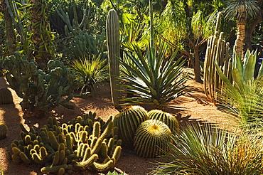 The Majorelle Gardens, Marrakesh, Morocco, North Africa, Africa