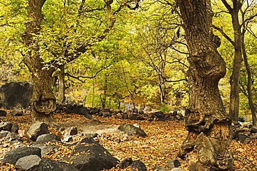 Forest near Imlil village, Toubkal mountains, High Atlas, Morocco, North Africa, Africa