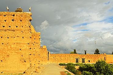 White storks, Palais Badi (El Badi Palace), Medina, Marrakesh, Morocco, North Africa, Africa