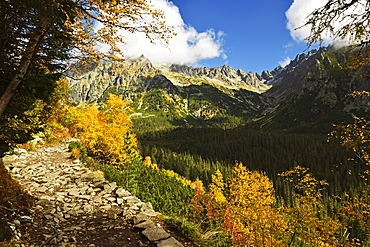Footpath in the Strbske Pleso area, High Tatras (Vysoke Tatry), Slovakia, Europe