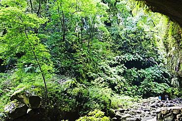 Laurel forest, Los Tilos Biosphere Reserve, La Palma, Canary Islands, Spain, Europe