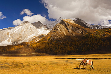 Xiaruoduojio mountain and horse, Yading Nature Reserve, Sichuan Province, China, Asia