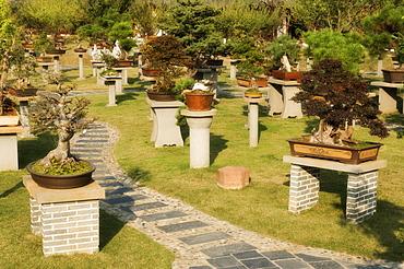 Bonsais, Bao's Family Garden, Tangyue Village, Anhui Province, China, Asia