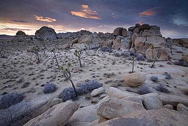 Landscape, Joshua Tree National Park, California, United States of America, North America
