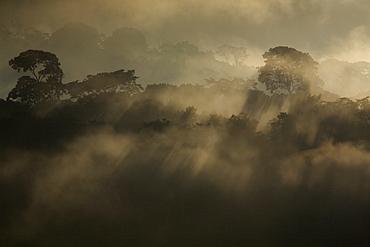 Rising rainforest mist, Peru, South America