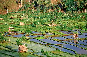 rice field, aerial view, Indonesia, Indian Ocean, Bali
