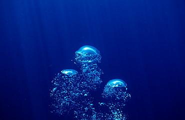 Air bubbles rising underwater, La Paz, Baja California, Mexico, Sea of Cortez, North America