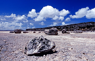 Desert landscape, Netherlands Antilles, Bonaire, Bonaire, Washington Slagbaai National Park, Suplad—