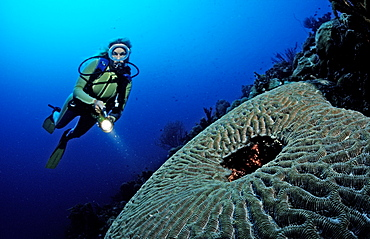 Scuba diver and coral reef, Saint Lucia, French West Indies, Caribbean Sea
