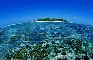 Coral Reef close to uninhabited Island, Maldives, Indian Ocean, Meemu Atoll