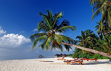 Beach on Maledivian Island, Maldives, Indian Ocean, Medhufushi, Meemu Atoll