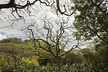 Botanical Garden Waimea Valley, Oahu, Pacific Ocean, Hawaii, USA