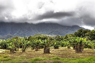 Landscape near Kualoa Ranch, Oahu, Pacific Ocean, Hawaii, USA