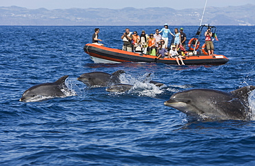 Tourists at Dolphin watching Tour, Tursiops truncatus, Azores, Atlantic Ocean, Portugal