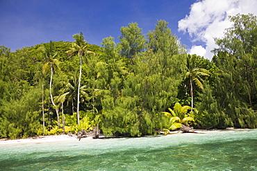 Palm-lined Beach at Palau, Micronesia, Palau