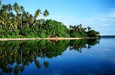 Island with coconut palms, Papua New Guinea, Neu Irland, New Ireland