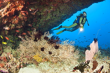 Overhang with Sea Fan and Diver, Himendhoo Thila, North Ari Atoll, Maldives