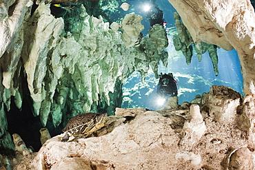 Scuba Diver discover Slider Turtle in Gran Cenote, Trachemys scripta venusta, Tulum, Yucatan Peninsula, Mexico