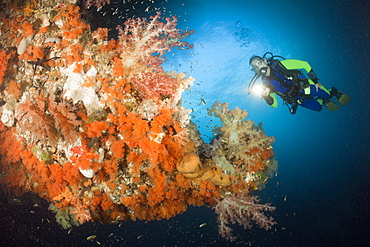 Scuba Diver and Colorful Coral Reef, Raja Ampat, West Papua, Indonesia