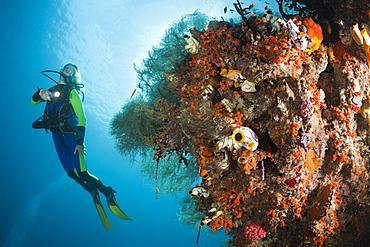 Scuba Diver at Coral Reef, Raja Ampat, West Papua, Indonesia