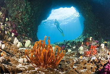 Scuba Diver in Grotto, Raja Ampat, West Papua, Indonesia