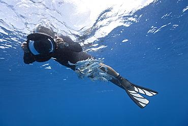 Sardines (Sardina pilchardus) hiding under diver, Isla Mujeres, Yucatan Peninsula, Caribbean Sea, Mexico, North America