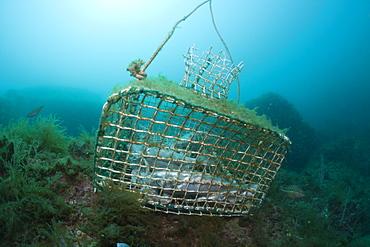 Fish trap on reef, Cap de Creus, Costa Brava, Spain, Mediterranean, Europe