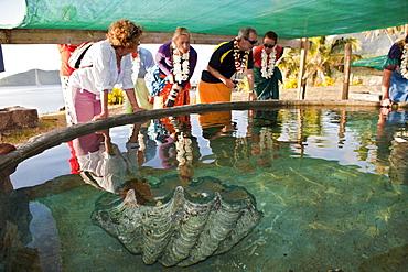 Giant clam (Tridacna gigas) and tourists visiting giant clam farm, Makogai, Lomaviti, Fiji, Pacific