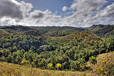 Hills of Las Terrenas, Samana Peninsula, Dominican Republic, West Indies, Central America
