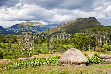 Traditional Dani village in the Baliem Valley, West Papua, Indonesia, Southeast Asia, Asia