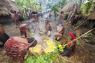 Dani Tribe preparing earth oven, Baliem Valley, West Papua, Indonesia, Southeast Asia, Asia