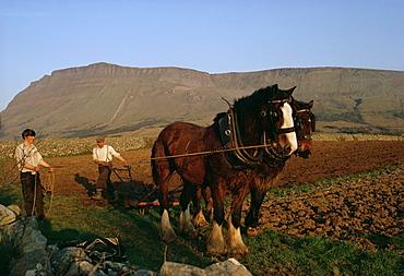 Horse and plough, County Sligo, Connacht, Eire (Republic of Ireland), Europe