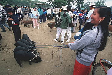 Otavalo Market, one of Latin America's most famous indigenous markets, with livestock, produce, textiles and crafts north of Quito, Ecuador